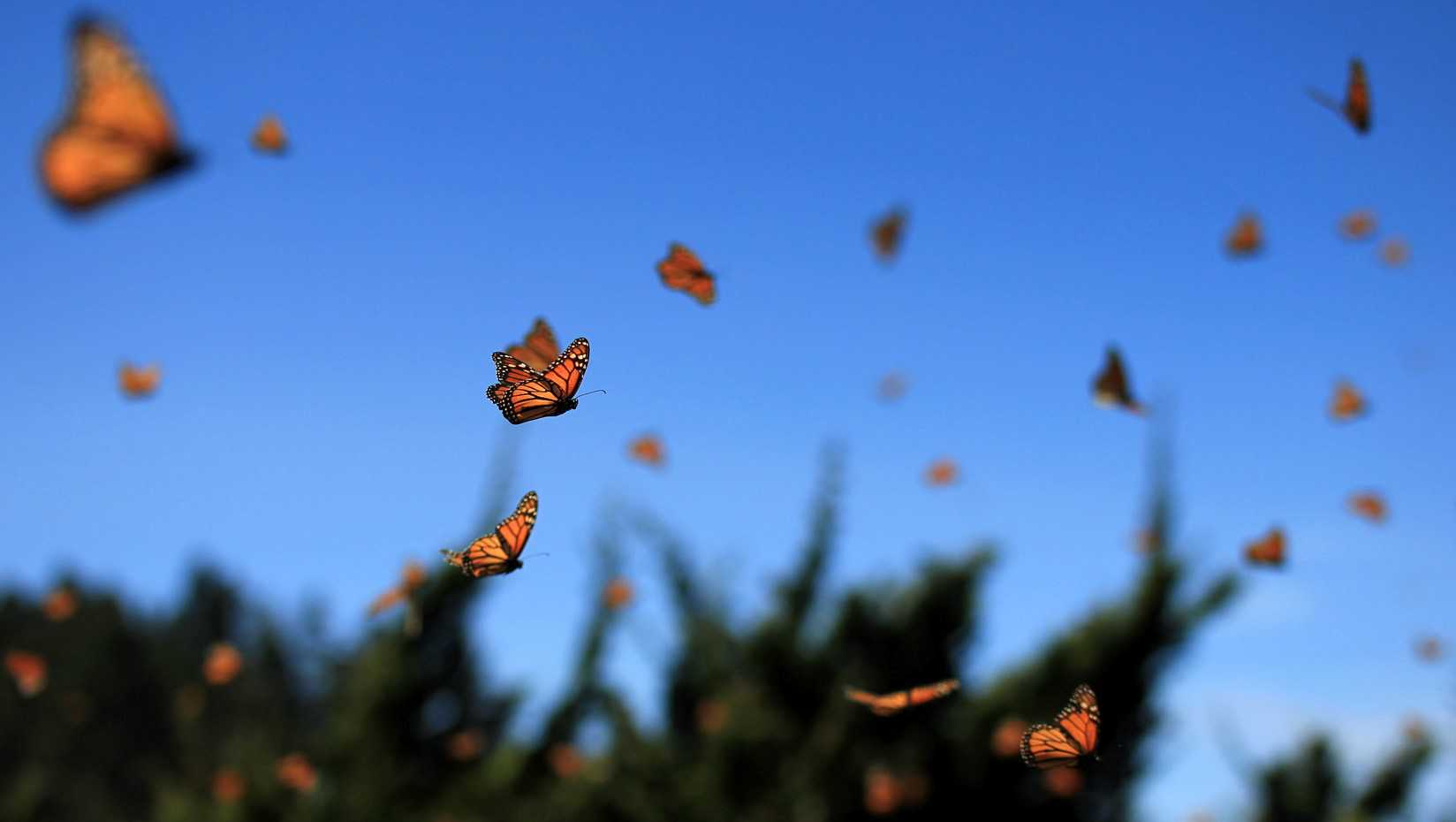 What is the Butterfly Model for dementia care?